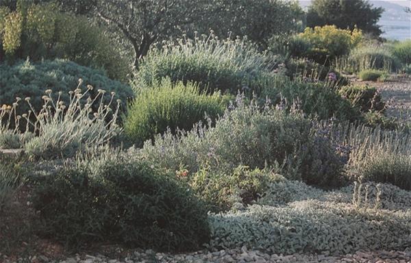 Nuove letture in giardino aboutgarden for Giardino mediterraneo
