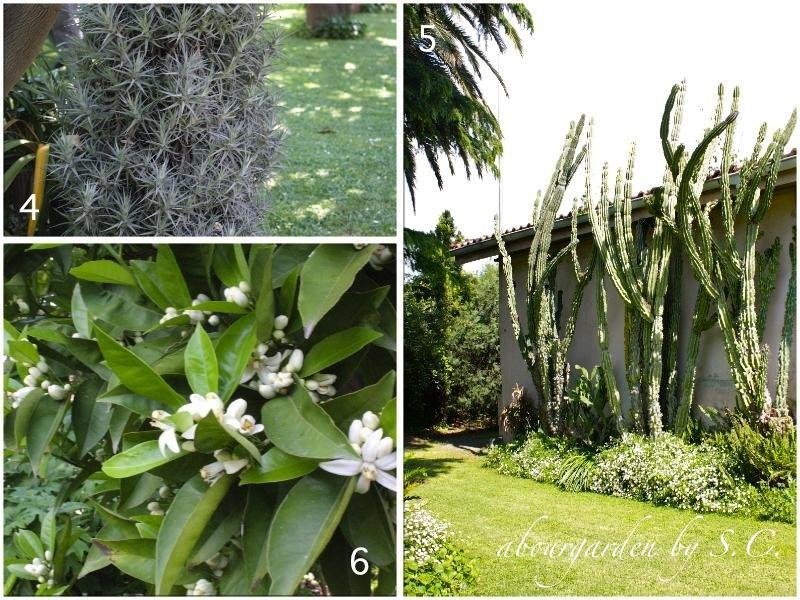 Il giardino di maria aboutgarden - Il giardino di ausonia ...