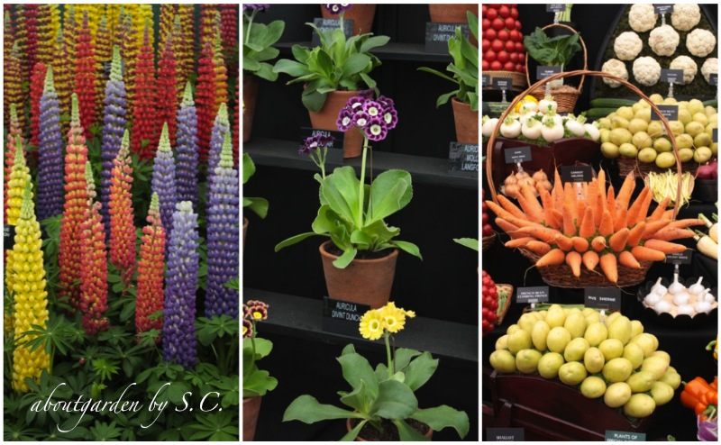 Piante e fiori al chelsea flower show aboutgarden for Piante e fiori