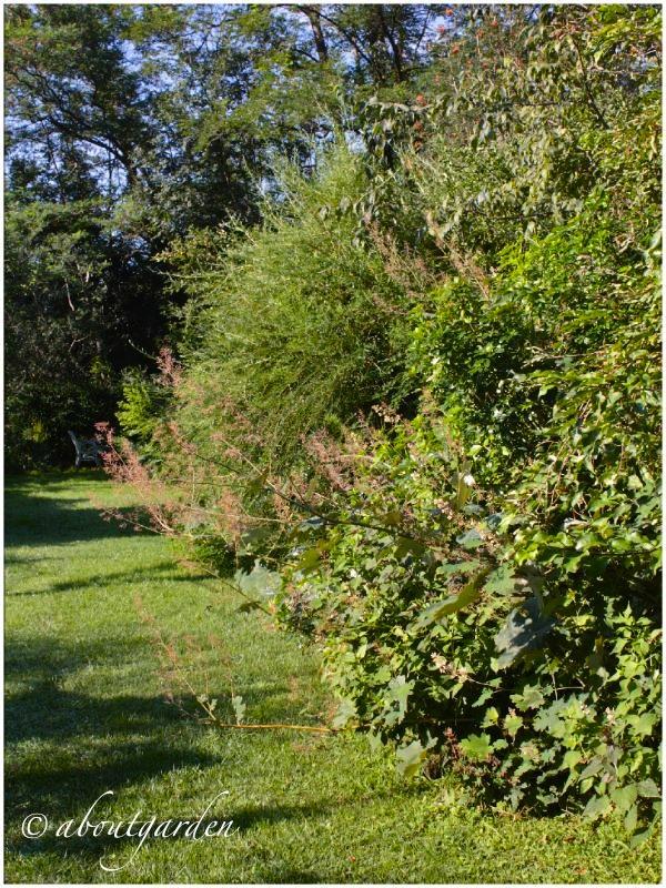 Festa in vivaio aboutgarden for Arbusti perenni da giardino