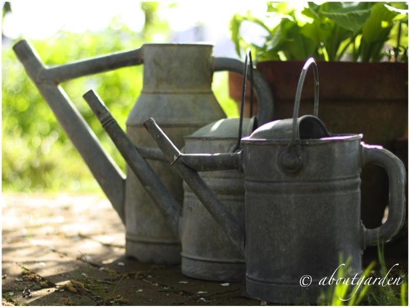 Watering zinc shabby chic on friday aboutgarden - Annaffiatoio da giardino ...