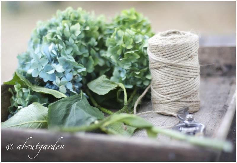Ortensie Con Foglie Arricciate : Far seccare i fiori delle ortensie aboutgarden