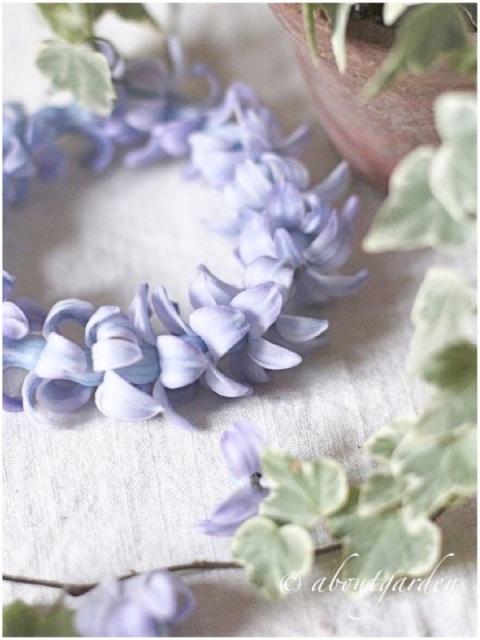 coroncina giacinto