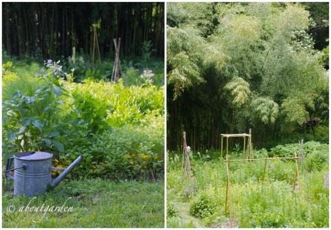 orto-giardino bambù
