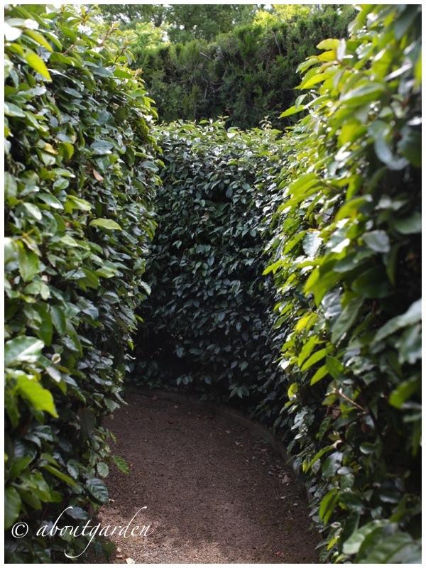 Jardin de l alchimiste aboutgarden for Giardino labirinto