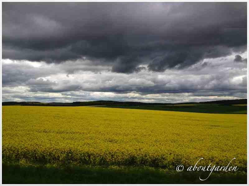paesaggio Borgogna