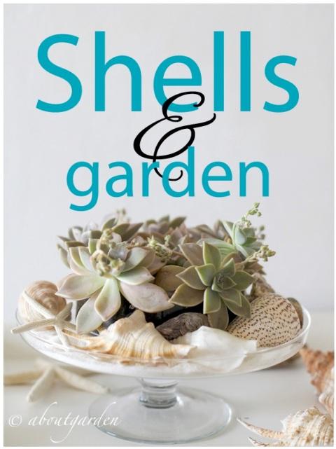 shells decoration  copia