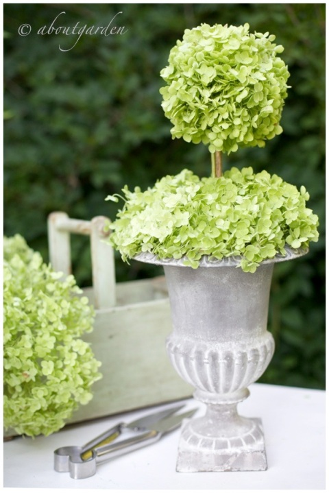 Mediceo pot with Hydrangea