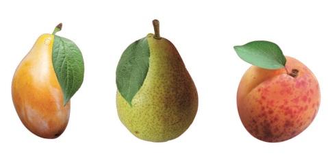 ffq-2013-frutta