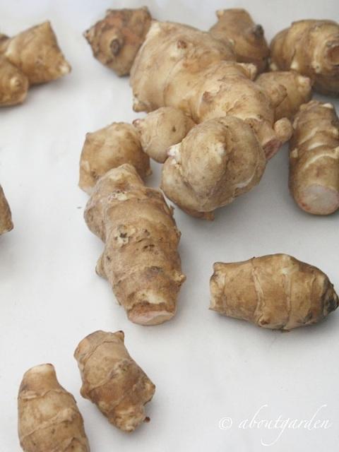 tuberi Topinabur