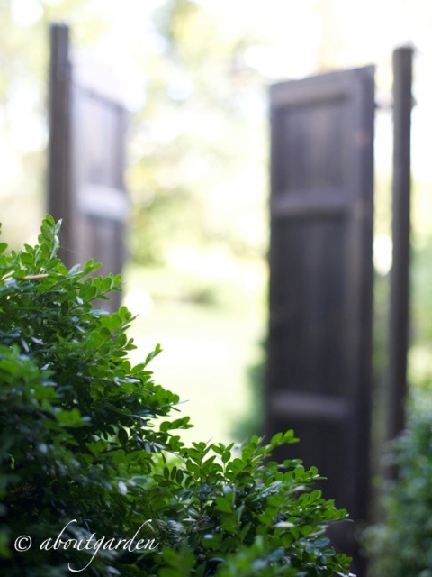 door in the garden