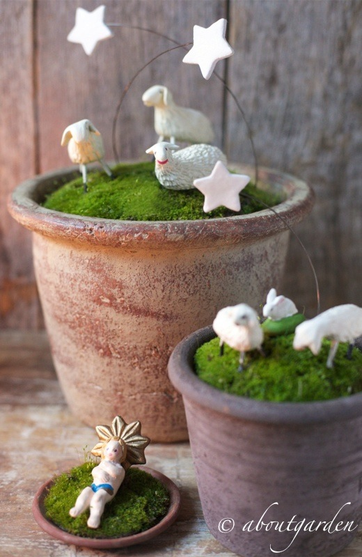 Top presepe in vaso… per Natale al VERDE | aboutgarden OA67