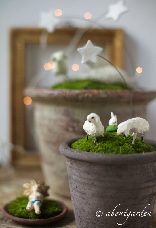 Top presepe in vaso… per Natale al VERDE | aboutgarden RL93