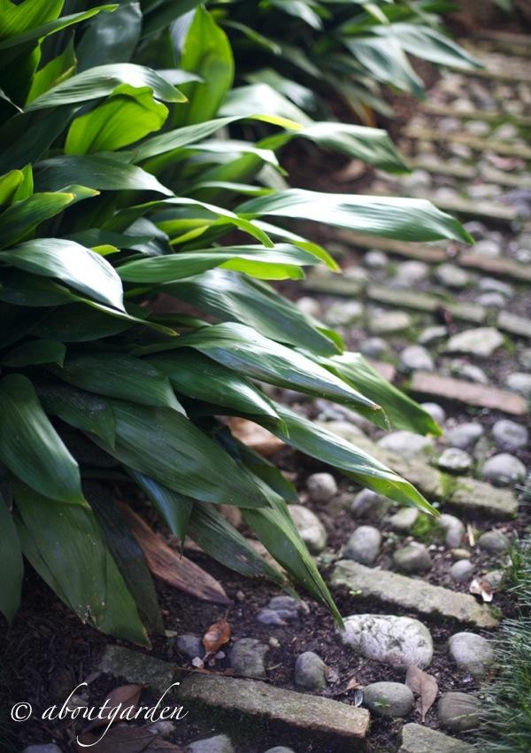 piante da cortile aboutgarden