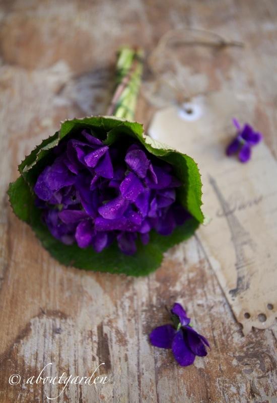 F 234 Te De La Violette Aboutgarden