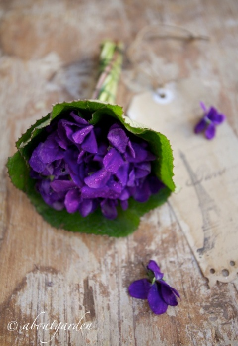 violetta bouquet