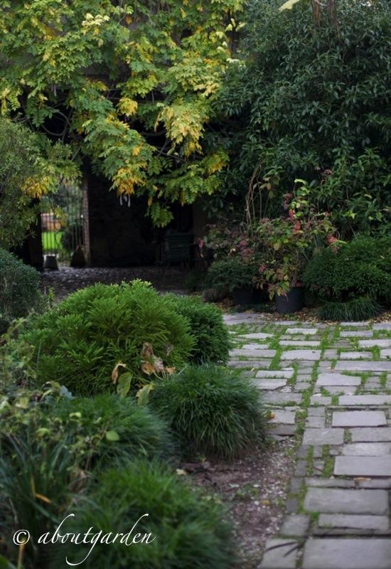 Piante da ombra aboutgarden - Piante da giardino ombra ...