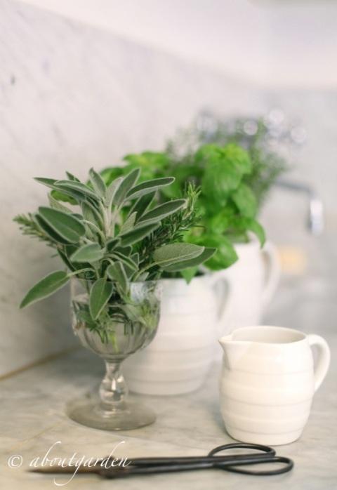 aromatiche in cucina