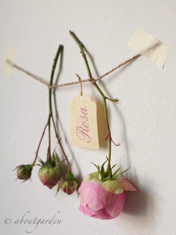 Come Far Seccare I Fiori How To Dry Flowers Aboutgarden