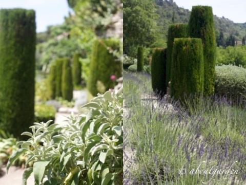 cipressi jardin La Louve