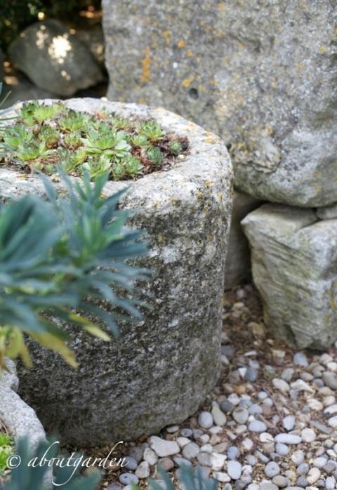 pietre e sempervivum  jardin La Louve