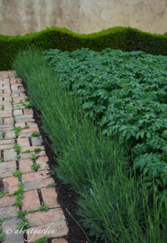 Dalle alle jardin free best alles de jardin originales en for Idea garden monselice orari