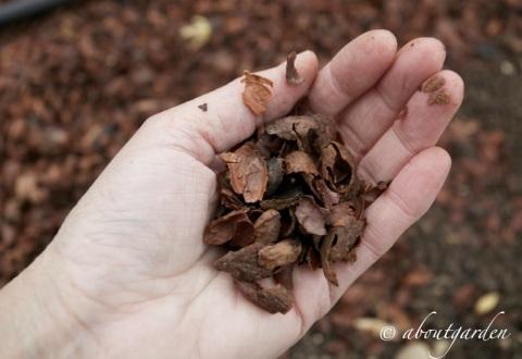 pacciamatura gusci di cacao