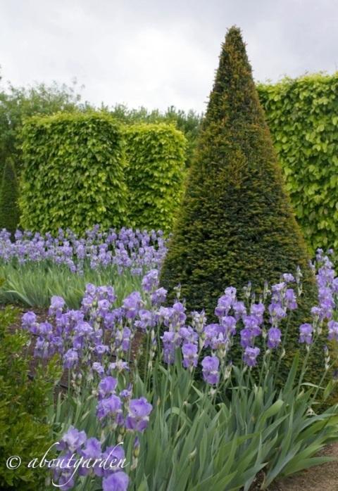 Giardino francese aboutgarden - Giardino francese ...