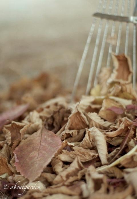 foglie a rastrello