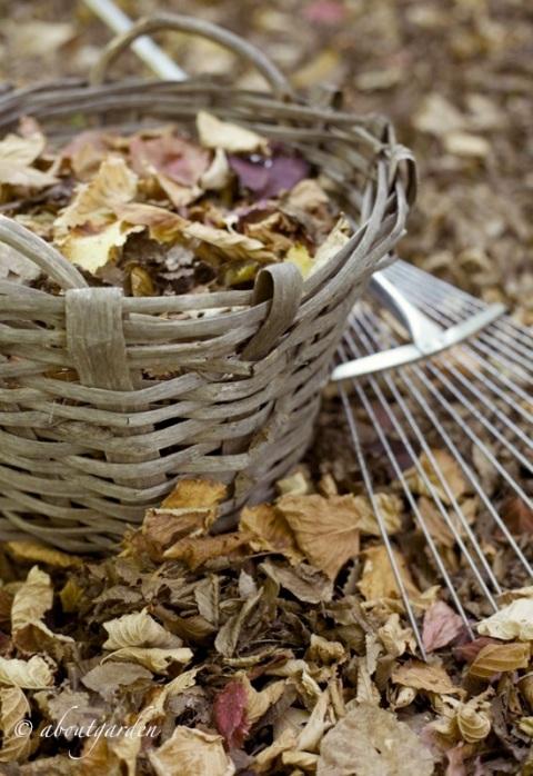 foglie nel cesto