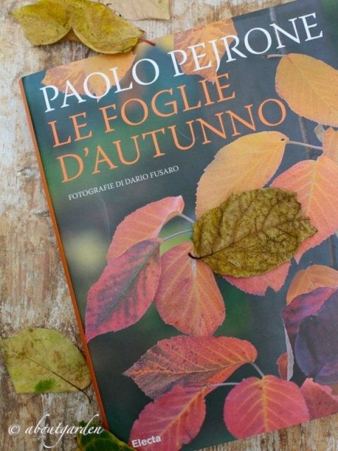 Le foglie d'autunno _Pejrone-Fusaro