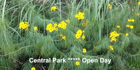 Open Day central Park