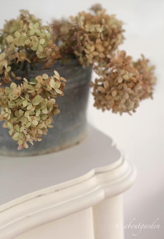 hydrangea in pot di zinco