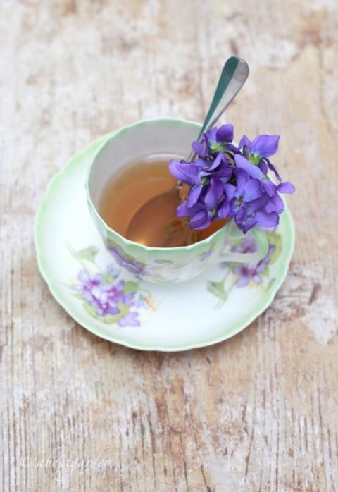 violette in tazza