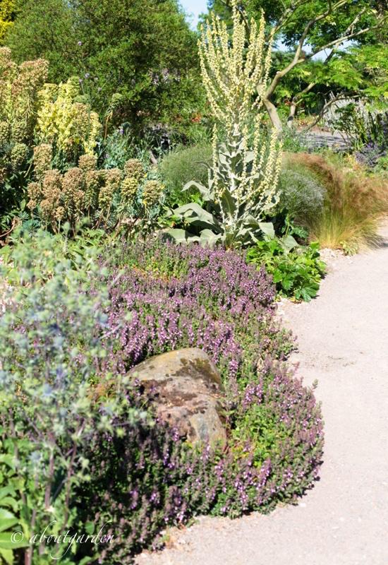 the dry garden at hyde hall | aboutgarden - Come Rendere Bello Il Giardino