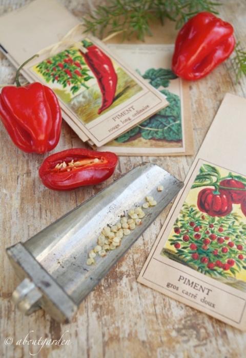 peperoncino semi
