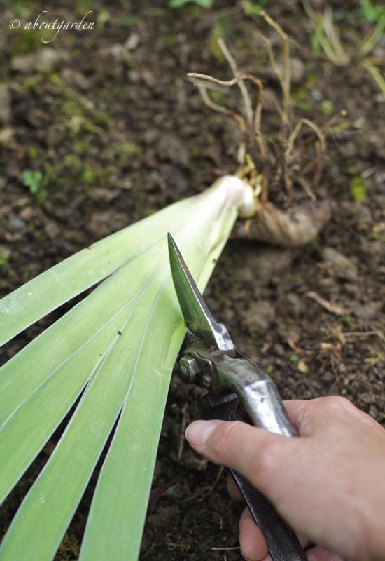 taglio foglie obliquo
