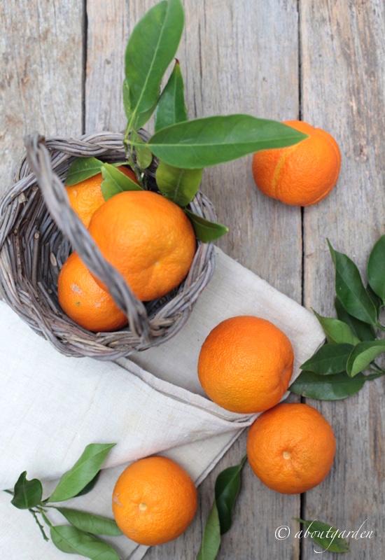 arancia dall'alto