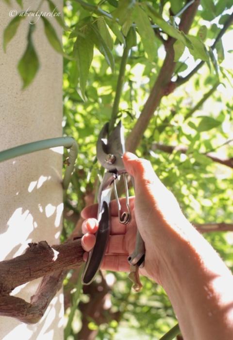taglio ramo