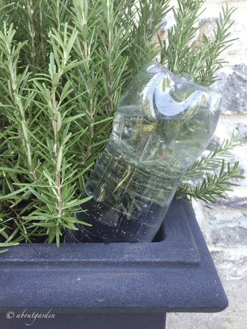 Bottiglia in  vaso