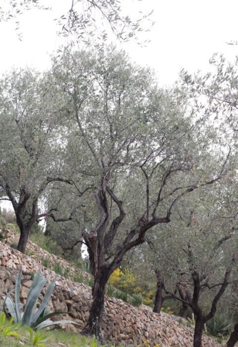 fasce e muretti in pietra giardino boccanegra