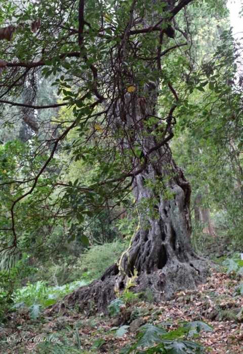 vecchio tronco