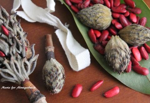 pot-pourri-magnolia