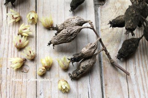 ingredienti-pot-pourri-umido-calicanto