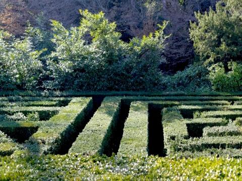 labirinto-villa-barbarigo