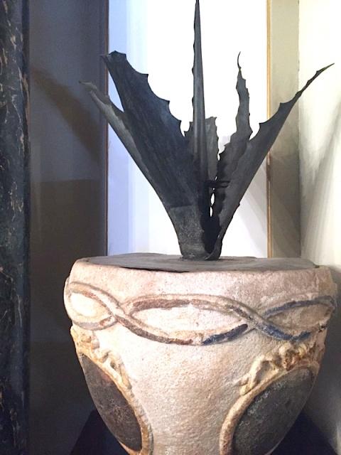 agave ferro