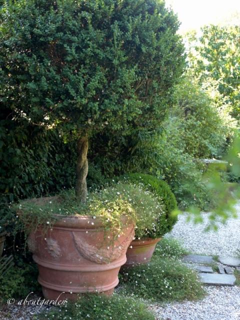 Bosso Topiary