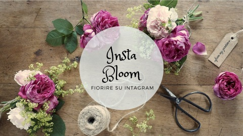Insta Bloom (trascinato)