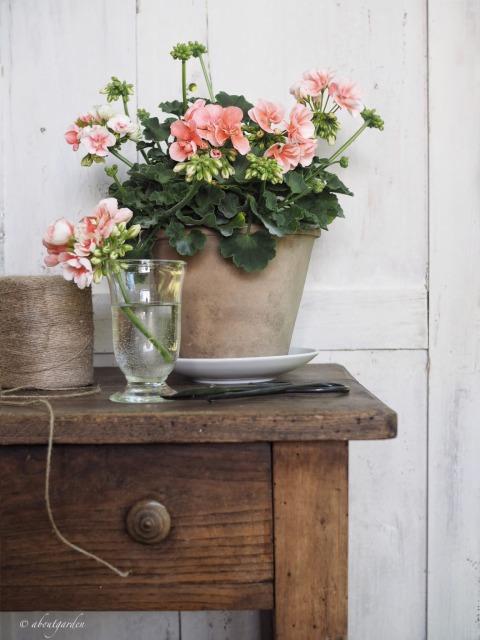 my geranium S. Chiarugi 1.jpg
